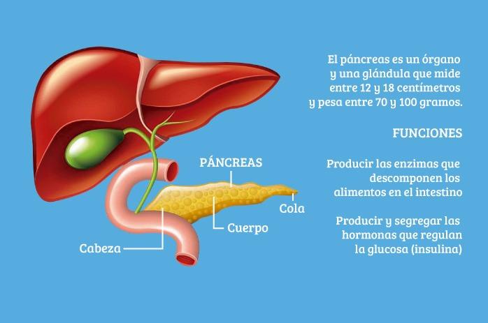 Qué es la hipoglucemia: función del páncreas