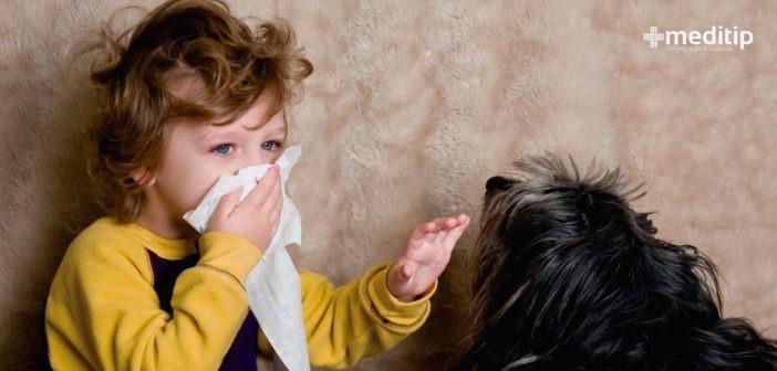 Alergia a mascotas