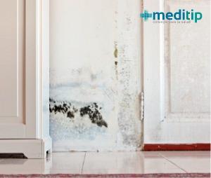Alergia al moho causas diagn stico y tratamiento meditip Moho en la pared