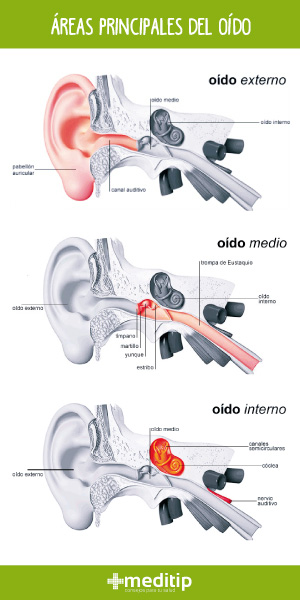 Partes principales del oído
