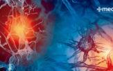 Función de las hormonas y el sistema endocrino