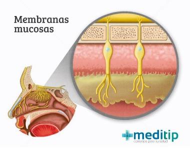 Membranas mucosas del sistema inmunológico