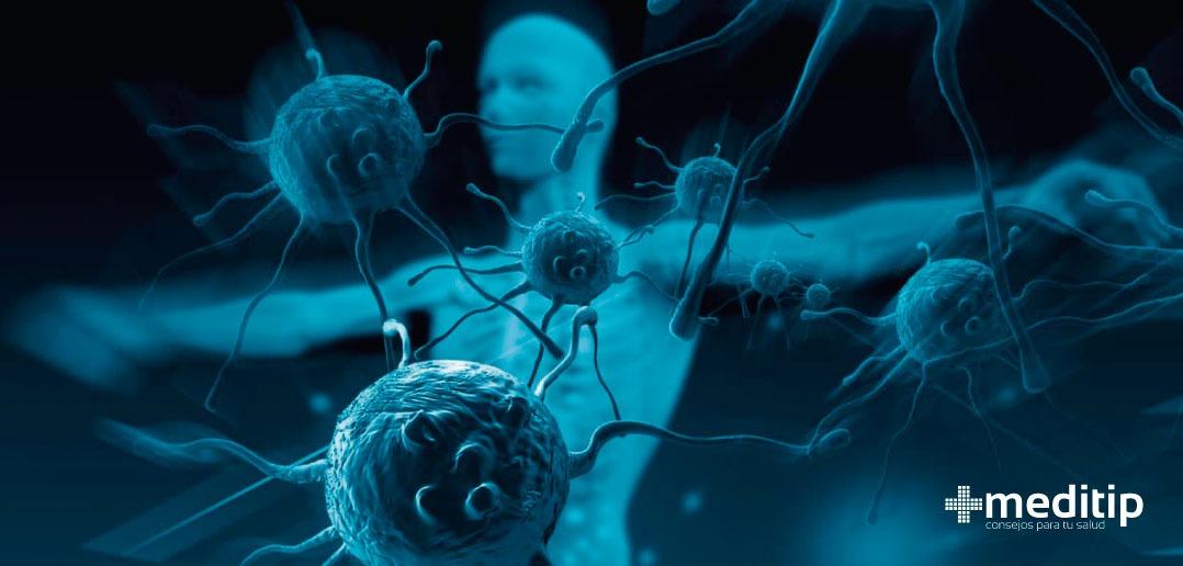Sistema inmunológico: función y características - Meditip