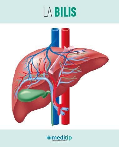 Bilis: un elemento esencial en la digestión de las grasas