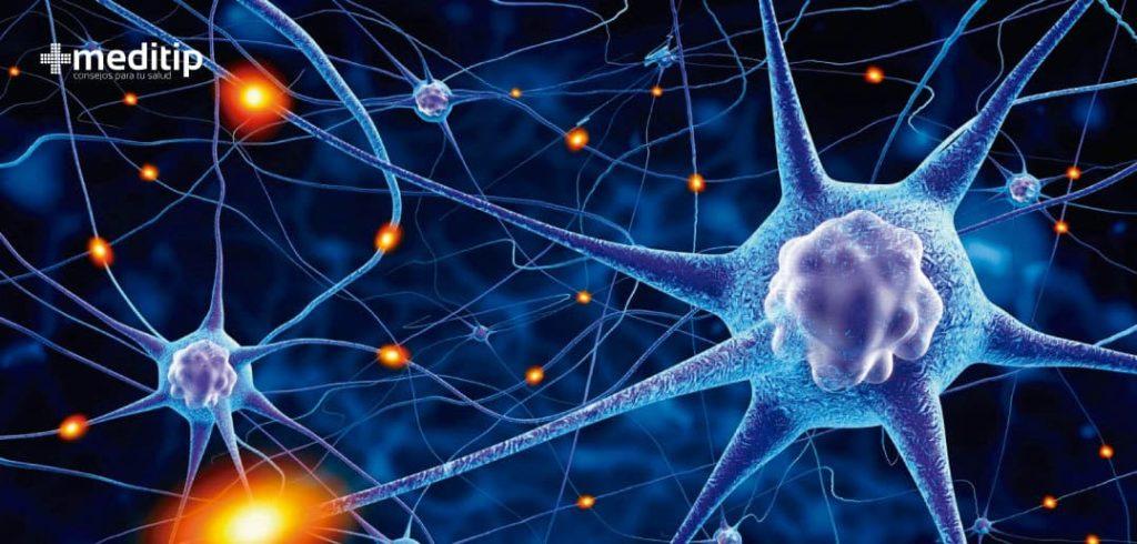 Usos de los aceites esenciales: células del sistema nervioso