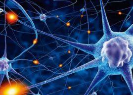 Sistema nervioso: definición, tipos y función