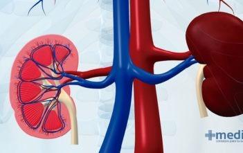 Circulación renal: flujo sanguíneo renal