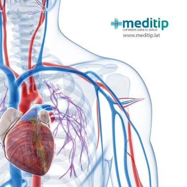 Del consejos sistema circulatorio circulatorios
