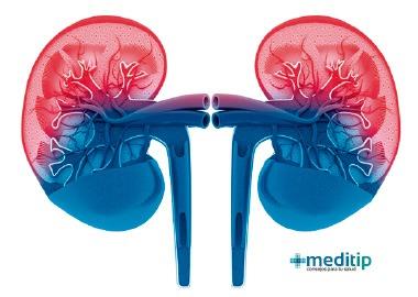Circulación renal: los riñones