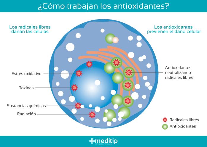 Ácido úrico y reparación de tejido: función de los antioxidantes