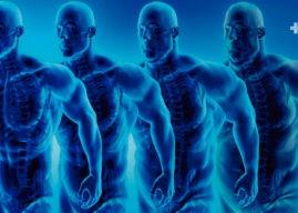 Composición corporal: definición, función y análisis