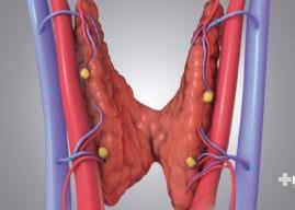 Glándulas paratiroides: definición, función y enfermedades