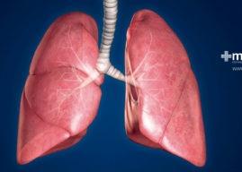 Pulmones y sistema respiratorio: anatomía y función