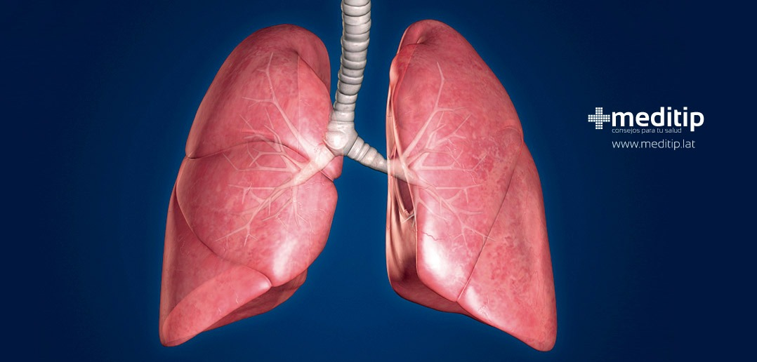 Pulmones y sistema respiratorio: anatomía y función - Meditip
