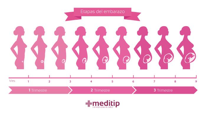 Qué es el embarazo: etapas del embarazo