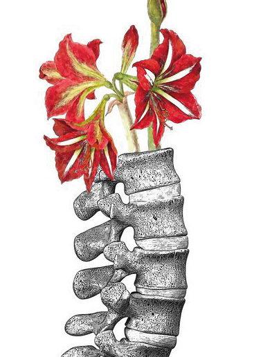 Ilustración en acuarela de la columna vertebral
