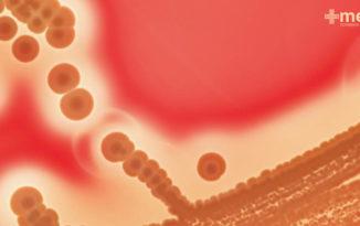 Vista microscópica de bacterias resistentes a los antibióticos