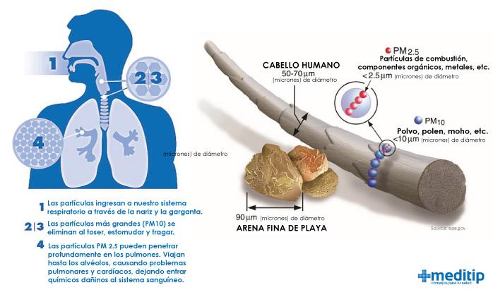 Cómo afectan las partículas PM 2.5 a las vías respiratorias