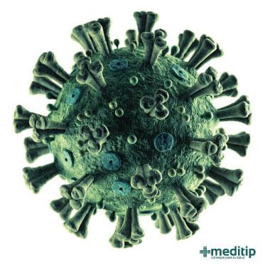 Modelo de coronavirus