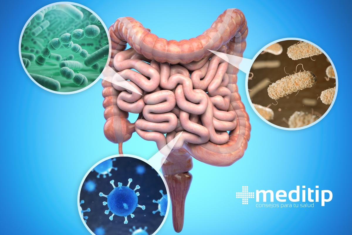 Disbiosis intestinal y el desarrollo de enfermedades: bacterias en el intestino